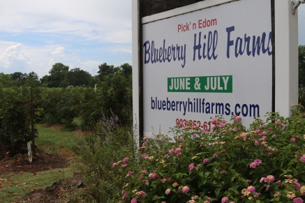 We took a mini road trip to Blueberry Hill Farms in Edom, Texas.